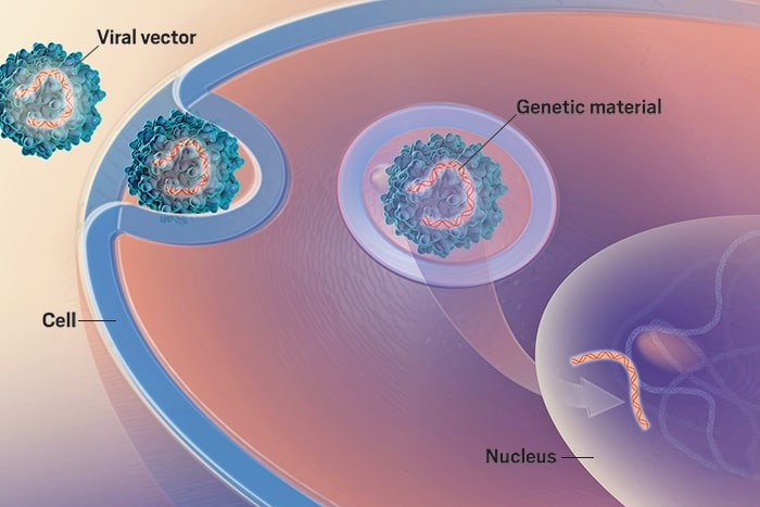 Noi perspective pentru creșterea eficacității terapiilor genice pentru hemofilia A și B