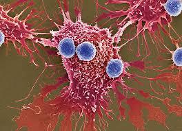 Posibil tratament al hemofiliei prin intermediul terapiei genice