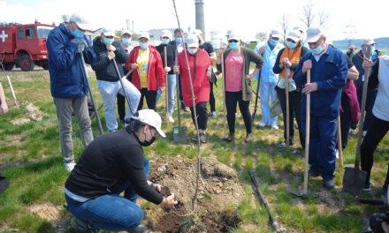 """Voluntarii Antibiotice au sărbătorit """"Ziua Pământului"""" plantând oxigen în comunitate"""